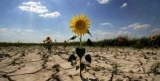 В Украине зафиксирована наибольшая за 10 лет засуха