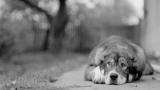 Вспоминая войну в Луганске: о верных, но голодных и беспомощных животных