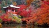 Парады гейш, цветущие клены и вишни: 7 причин, чтобы посетить Японию в ноябре