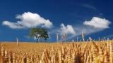 Бюджет-2018: Як підтримати аграріїв?