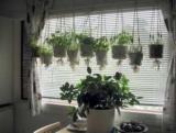 Свойства комнатных растений: выберите собственный