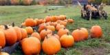 Природа говорит: народные приметы времени в октябре и народные приметы на покров Пресвятой Богородицы
