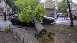 В Херсоне непогода повалила деревья и превратила дороги в бурные реки